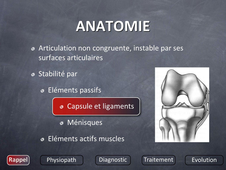 ANATOMIE Articulation non congruente, instable par ses surfaces articulaires. Stabilité par. Eléments passifs.