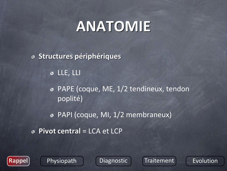 ANATOMIE Structures périphériques LLE, LLI
