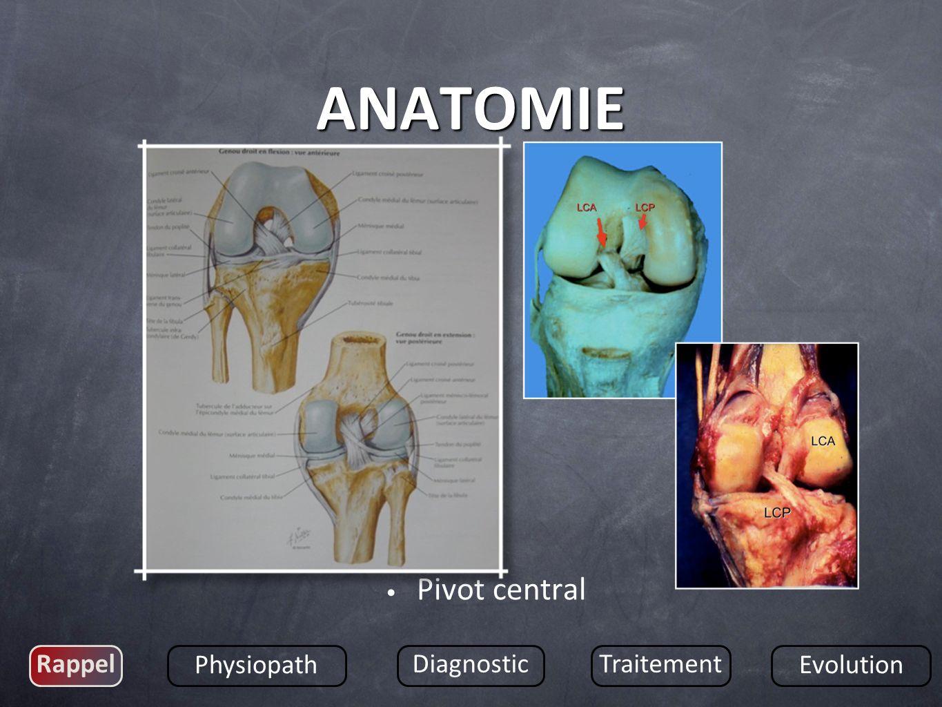 ANATOMIE Pivot central Rappel Physiopath Diagnostic Traitement