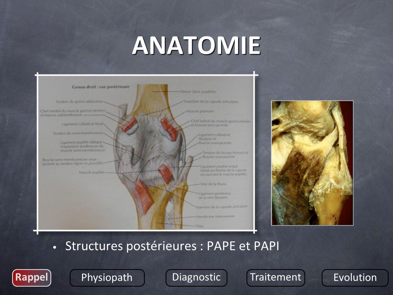 ANATOMIE Structures postérieures : PAPE et PAPI Rappel Physiopath