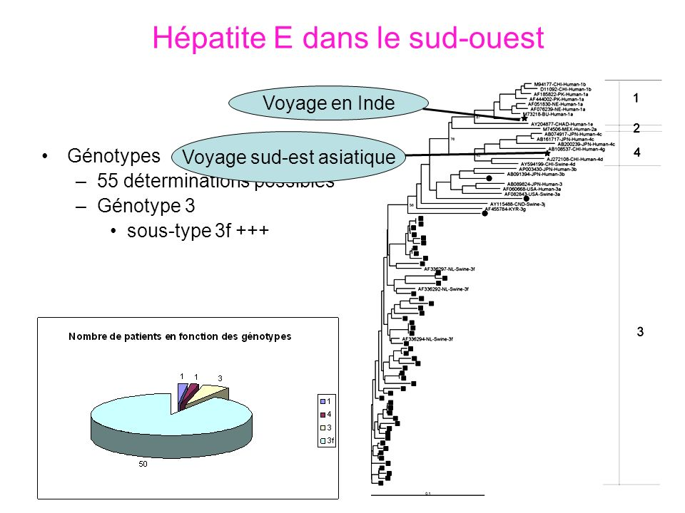 Hépatite E dans le sud-ouest
