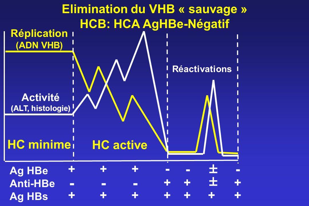 Elimination du VHB « sauvage » HCB: HCA AgHBe-Négatif