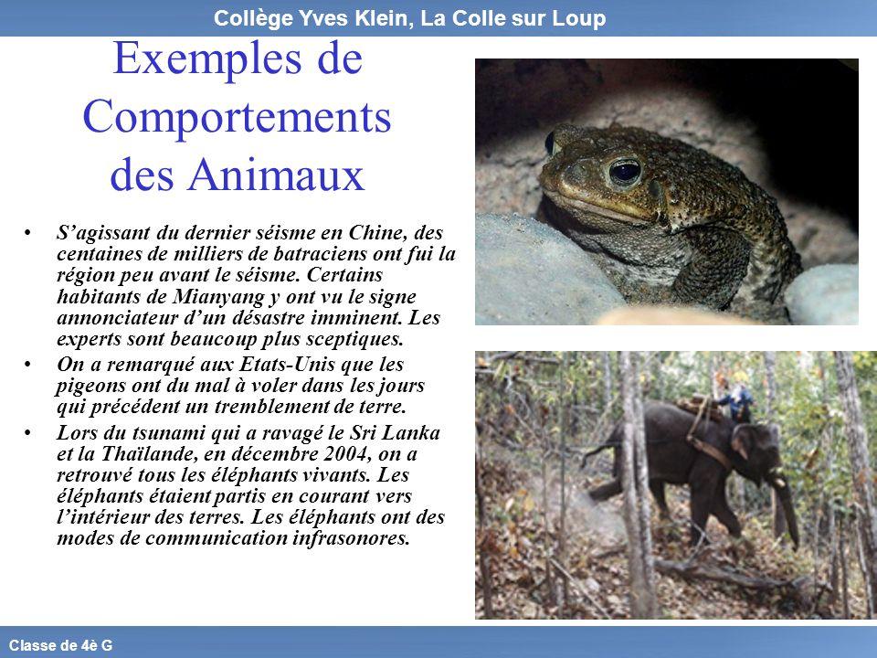 Exemples de Comportements des Animaux
