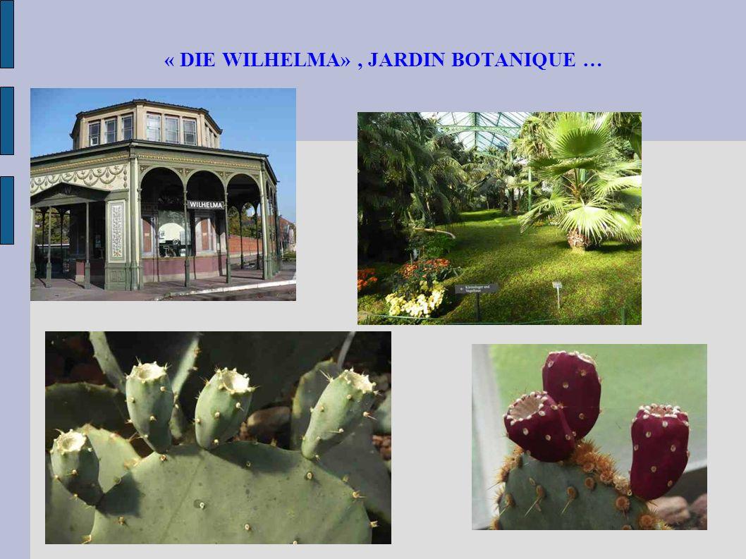« DIE WILHELMA» , JARDIN BOTANIQUE …