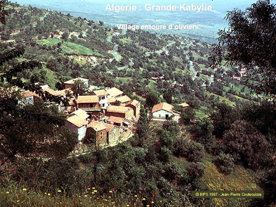 Algérie : Grande Kabylie Village entouré d'oliviers.