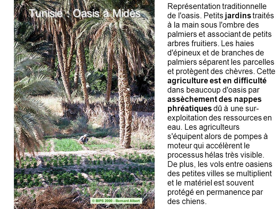 Tunisie : Oasis à Midès