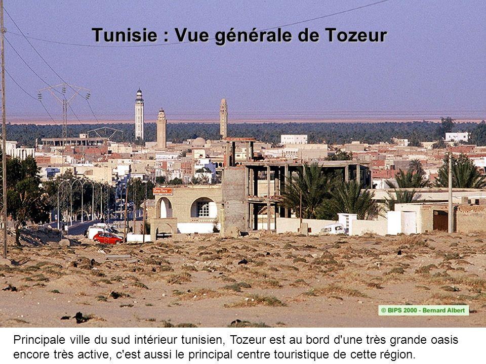 Tunisie : Vue générale de Tozeur