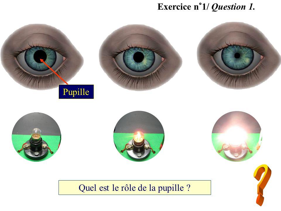 Quel est le rôle de la pupille