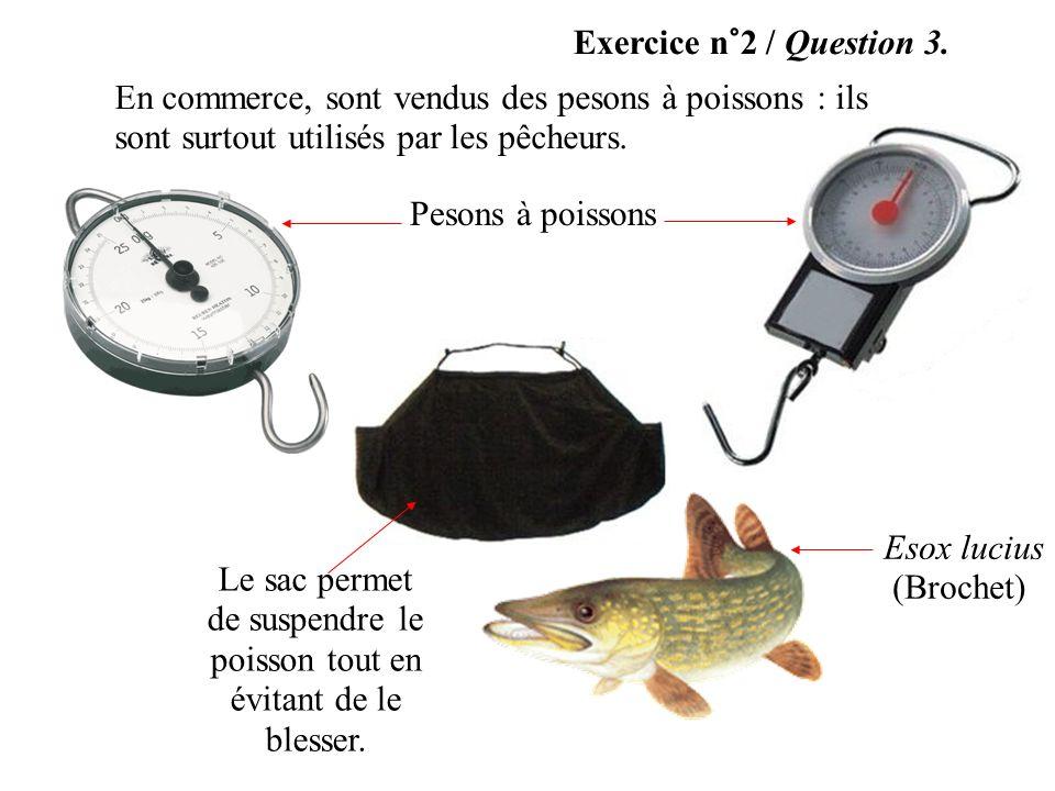 Le sac permet de suspendre le poisson tout en évitant de le blesser.