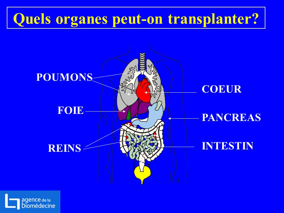 Quels organes peut-on transplanter