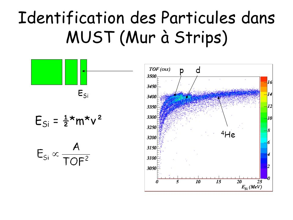 Identification des Particules dans MUST (Mur à Strips)