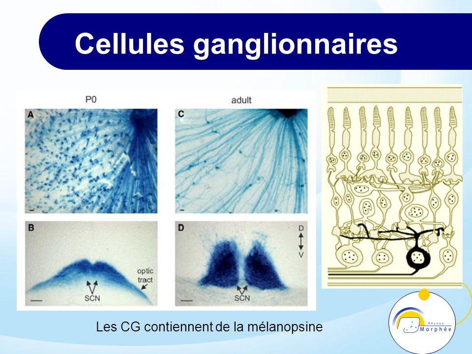 Cellules ganglionnaires
