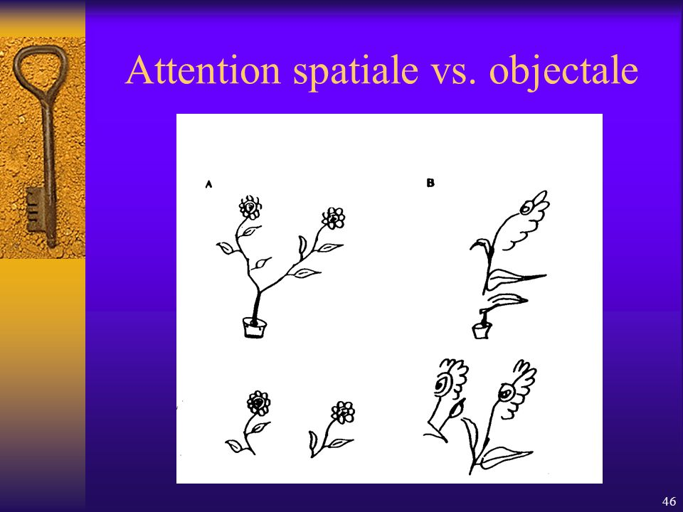 Attention spatiale vs. objectale