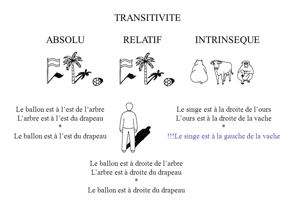 TRANSITIVITE ABSOLU RELATIF INTRINSEQUE
