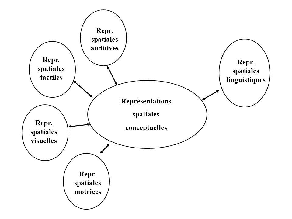 Repr. spatiales. auditives. Repr. spatiales. linguistiques. Repr. spatiales. tactiles. Représentations.