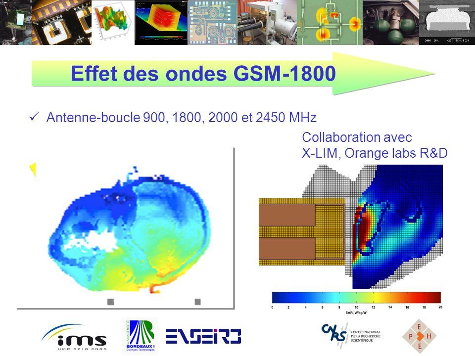 Effet des ondes GSM-1800 Antenne-boucle 900, 1800, 2000 et 2450 MHz
