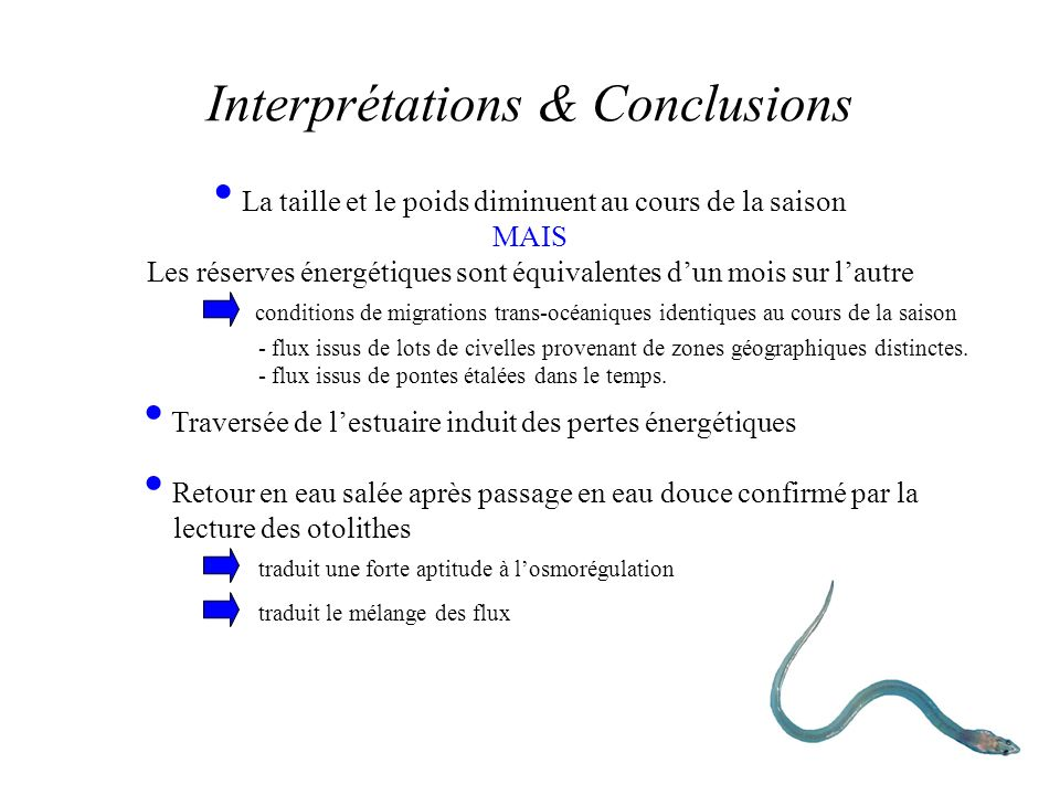 Interprétations & Conclusions