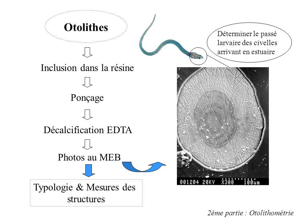Otolithes Inclusion dans la résine Ponçage Décalcification EDTA