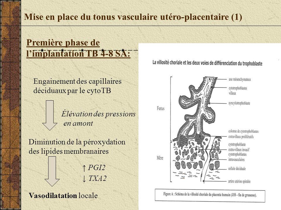 Mise en place du tonus vasculaire utéro-placentaire (1)