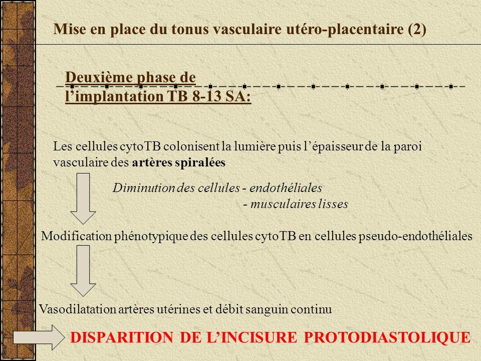 Mise en place du tonus vasculaire utéro-placentaire (2)