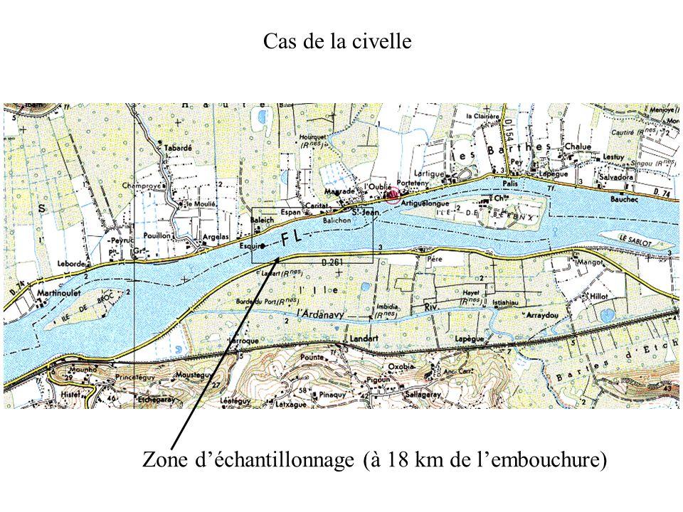 Cas de la civelle Zone d'échantillonnage (à 18 km de l'embouchure)