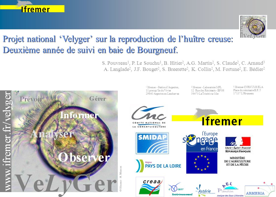 Projet national 'Velyger' sur la reproduction de l'huître creuse: Deuxième année de suivi en baie de Bourgneuf.