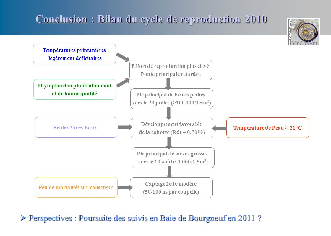 Conclusion : Bilan du cycle de reproduction 2010