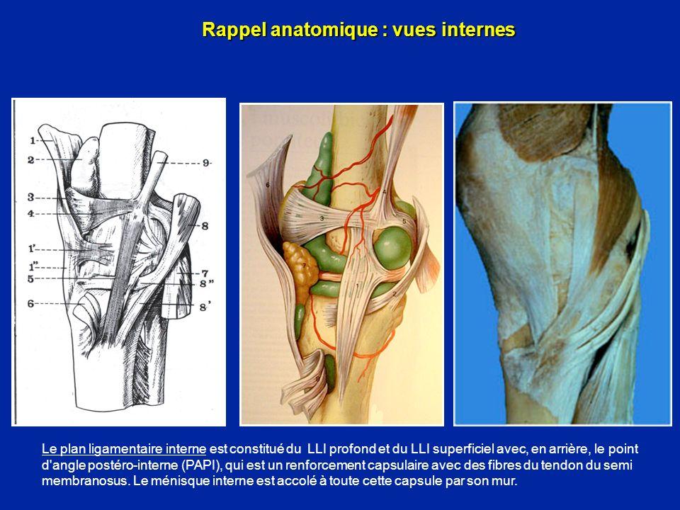 Rappel anatomique : vues internes