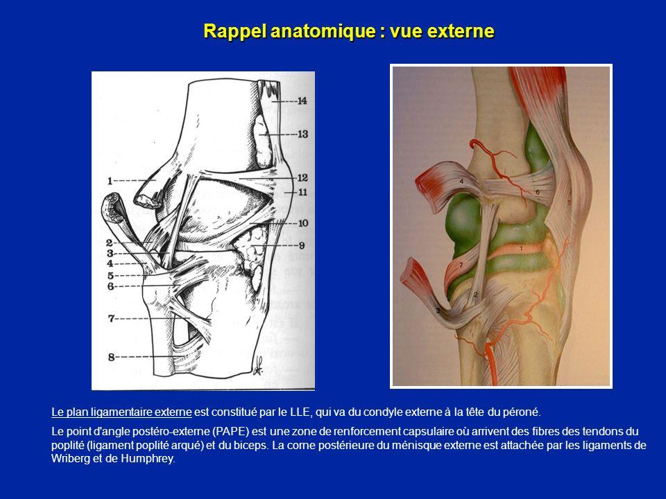Rappel anatomique : vue externe