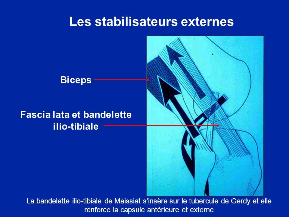 Les stabilisateurs externes Fascia lata et bandelette ilio-tibiale