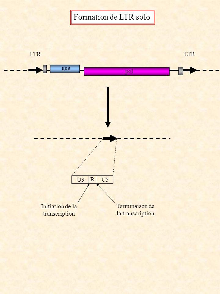 Formation de LTR solo LTR LTR gag pol U3 R U5