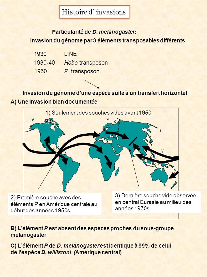 Invasion du génome d'une espèce suite à un transfert horizontal