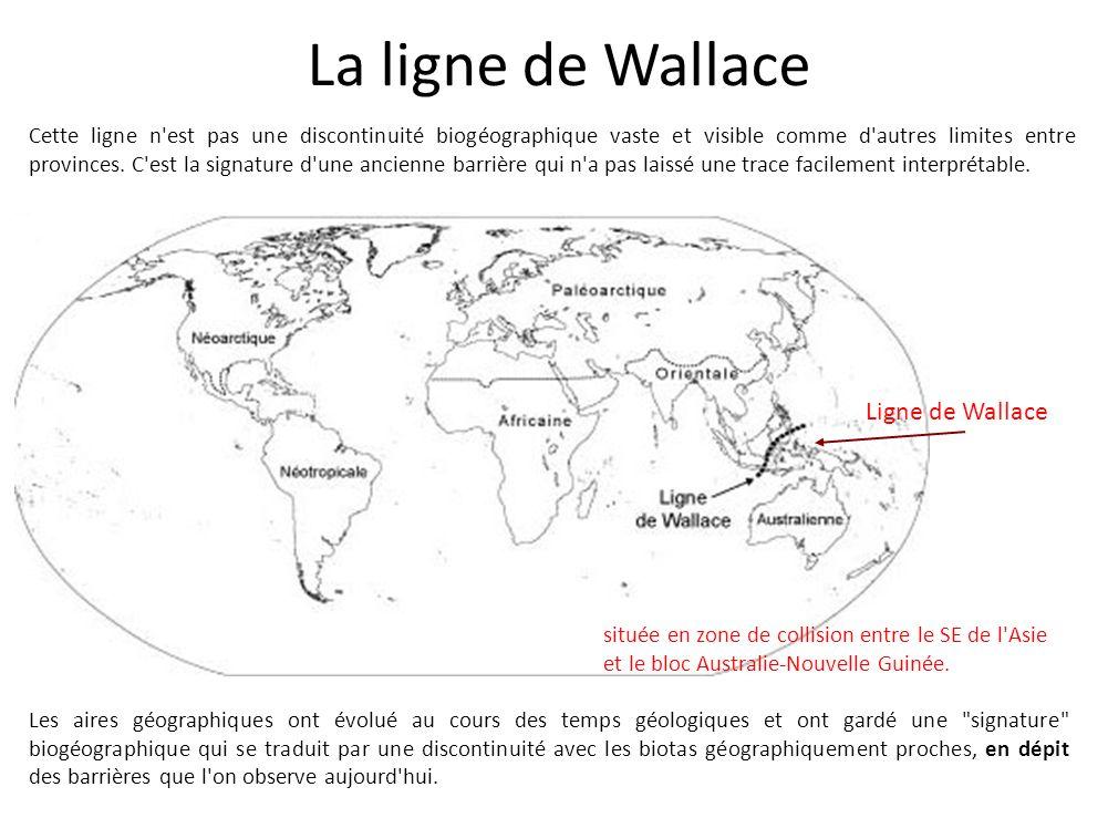 La ligne de Wallace Ligne de Wallace