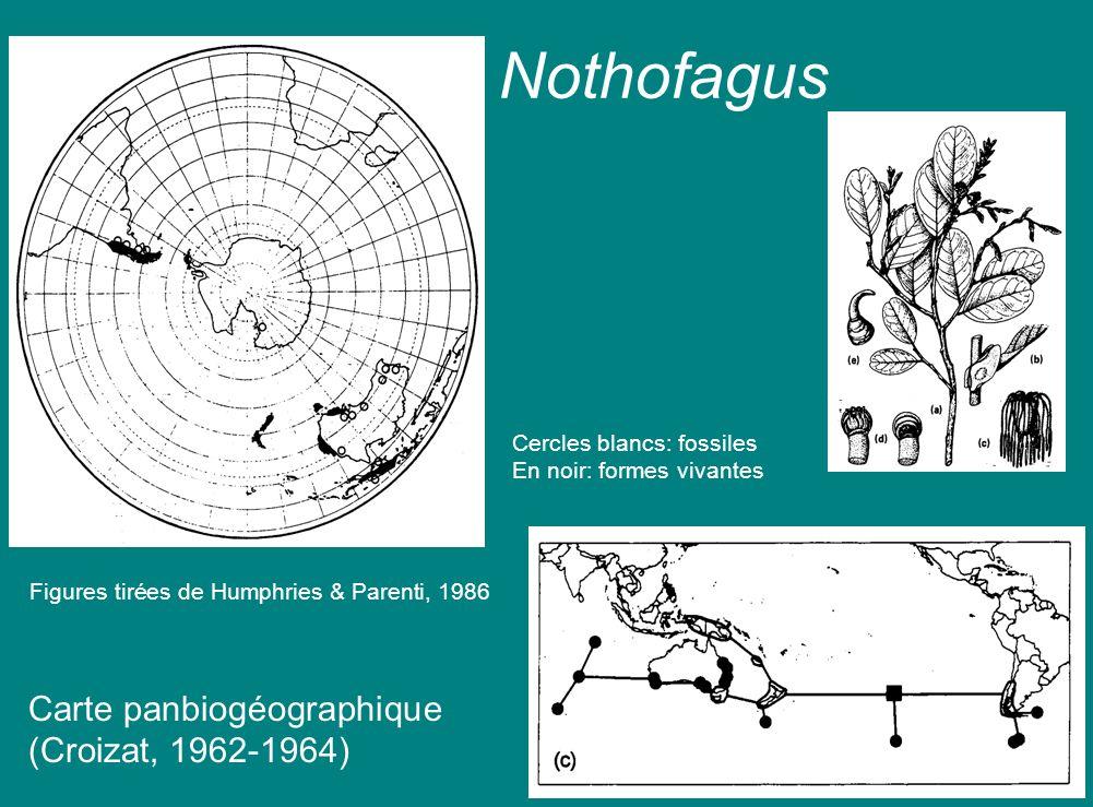 Nothofagus Carte panbiogéographique (Croizat, 1962-1964)