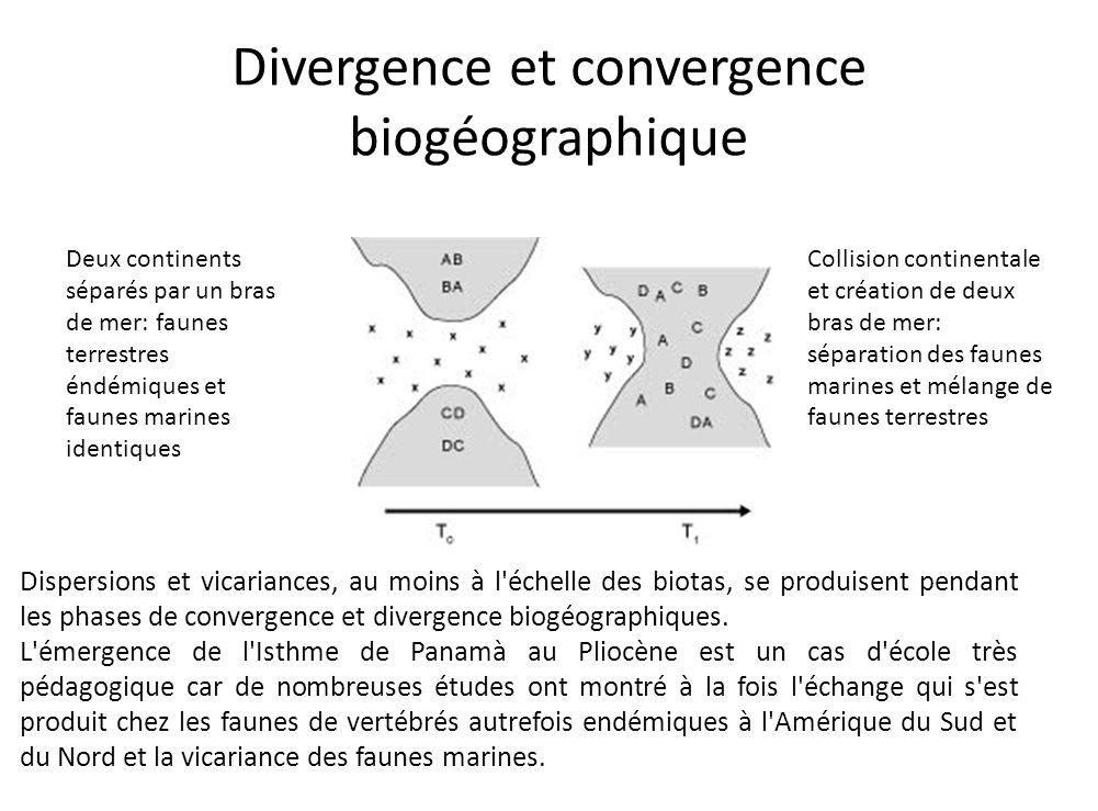 Divergence et convergence biogéographique