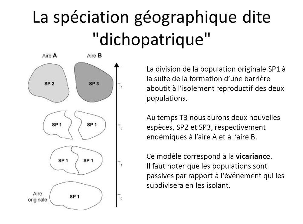 La spéciation géographique dite dichopatrique
