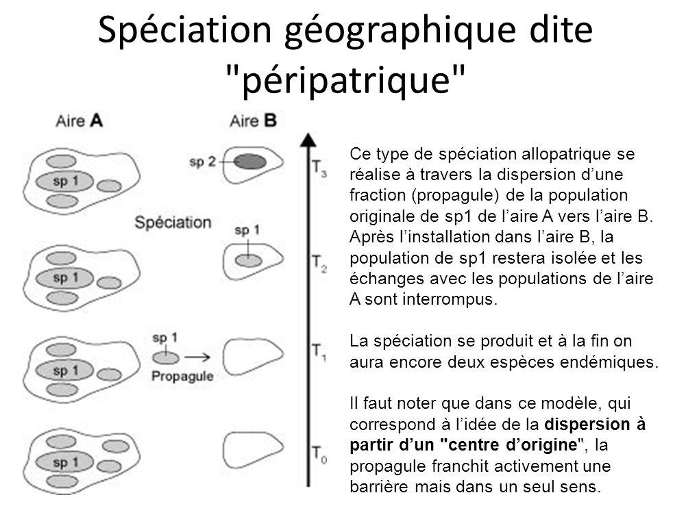 Spéciation géographique dite péripatrique