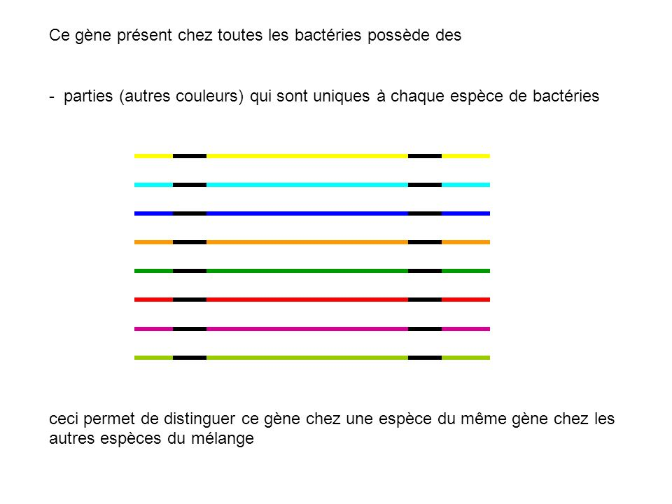 Ce gène présent chez toutes les bactéries possède des
