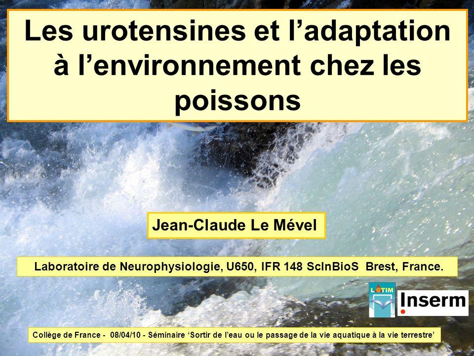 Les urotensines et l'adaptation à l'environnement chez les poissons