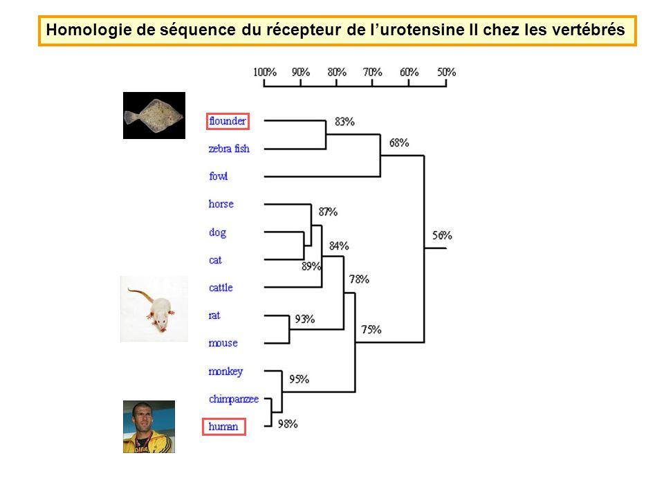 Homologie de séquence du récepteur de l'urotensine II chez les vertébrés
