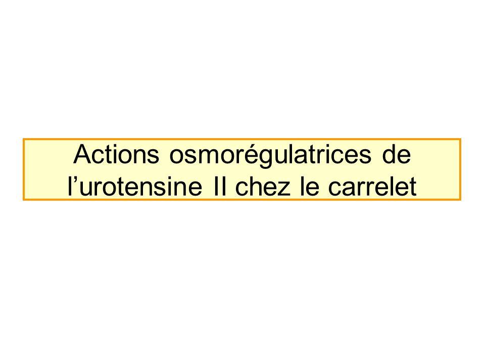 Actions osmorégulatrices de l'urotensine II chez le carrelet