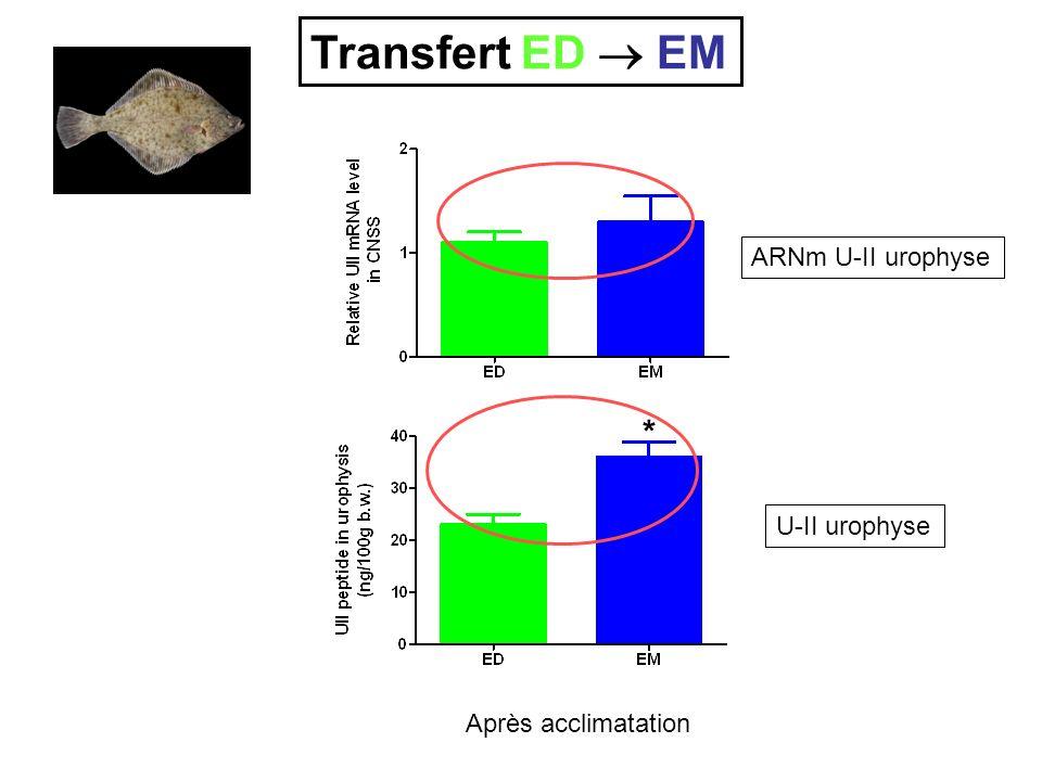 Transfert ED  EM * ARNm U-II urophyse U-II urophyse