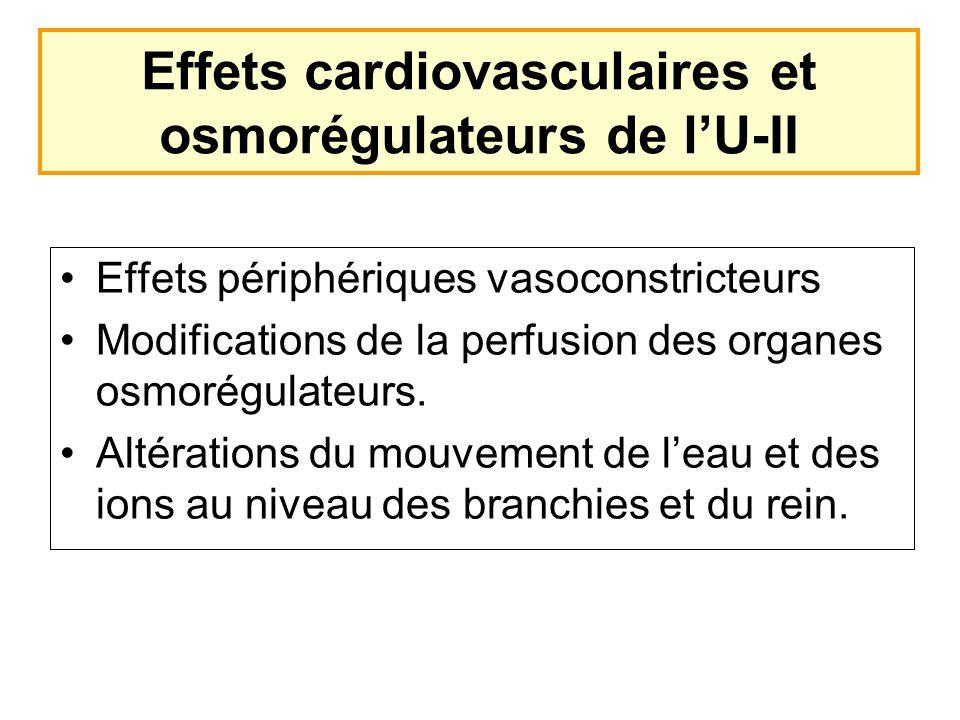 Effets cardiovasculaires et osmorégulateurs de l'U-II