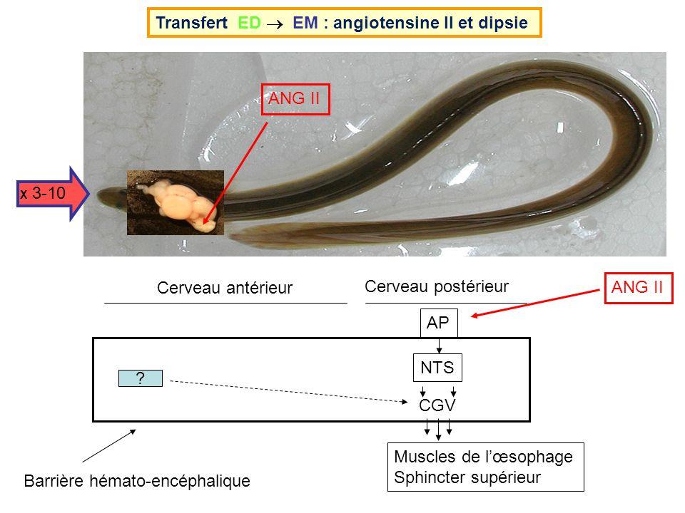 Transfert ED  EM : angiotensine II et dipsie