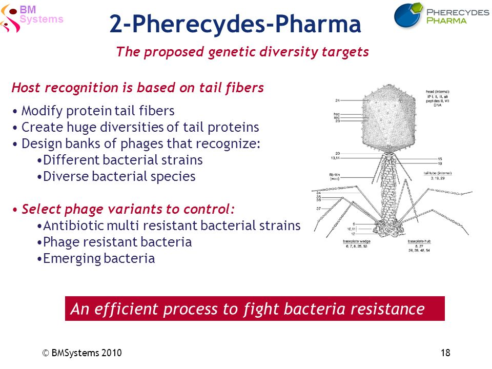 2-Pherecydes-Pharma An efficient process to fight bacteria resistance
