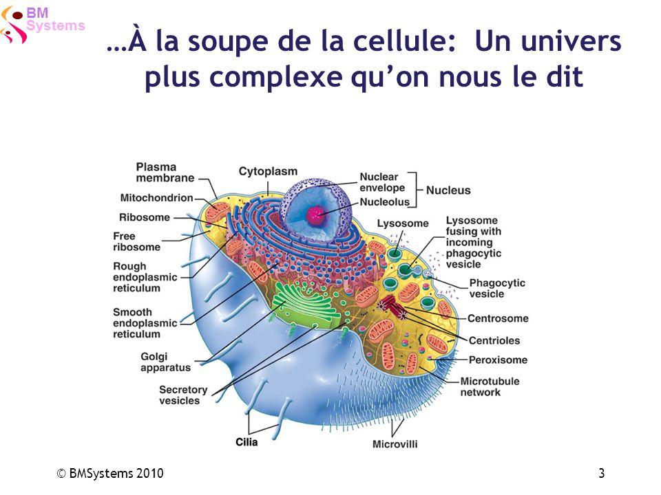 …À la soupe de la cellule: Un univers plus complexe qu'on nous le dit