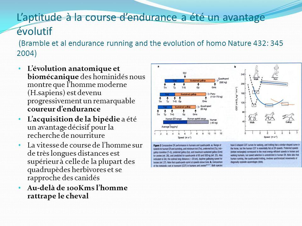 L'évolution anatomique et biomécanique des hominidés nous montre que l'homme moderne (H.sapiens) est devenu progressivement un remarquable coureur d'endurance