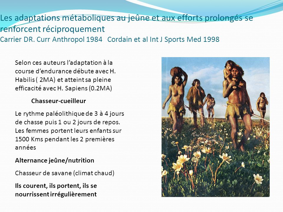 Les adaptations métaboliques au jeûne et aux efforts prolongés se renforcent réciproquement Carrier DR. Curr Anthropol 1984 Cordain et al Int J Sports Med 1998