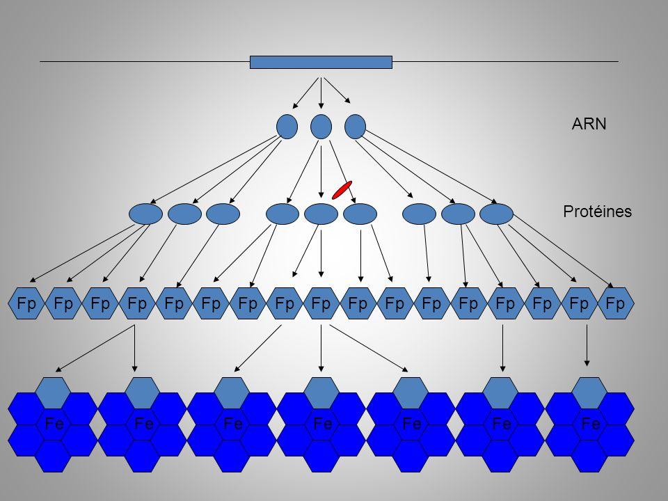 ARN Protéines. Fp. Fp. Fp. Fp. Fp. Fp. Fp. Fp. Fp. Fp. Fp. Fp. Fp. Fp. Fp. Fp. Fp.