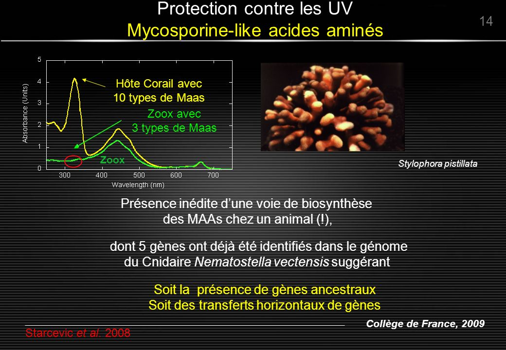 Protection contre les UV Mycosporine-like acides aminés